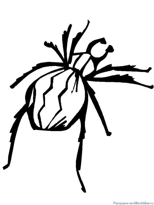 Ползущий паук