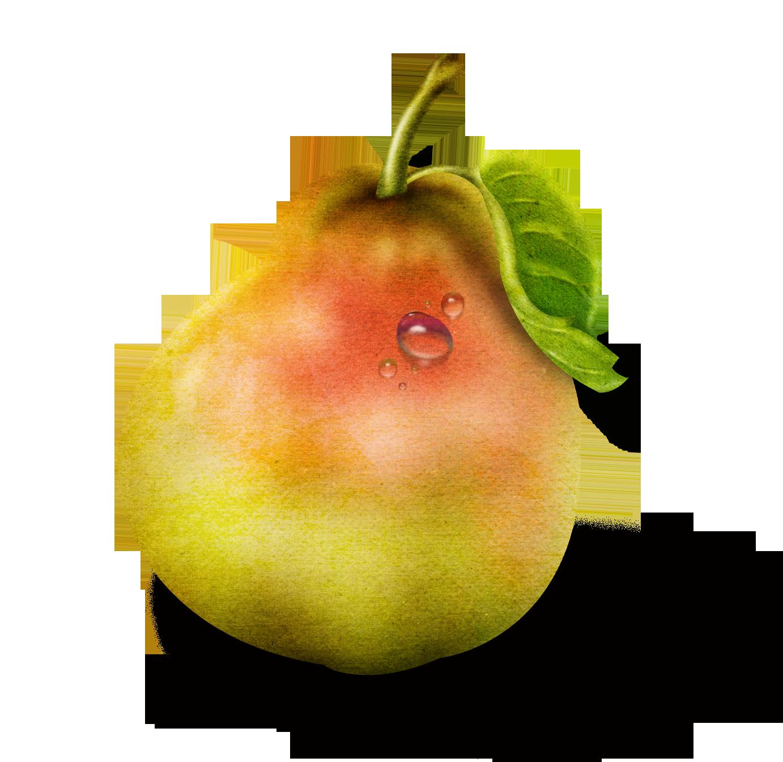 Фото фруктов для детей цветные