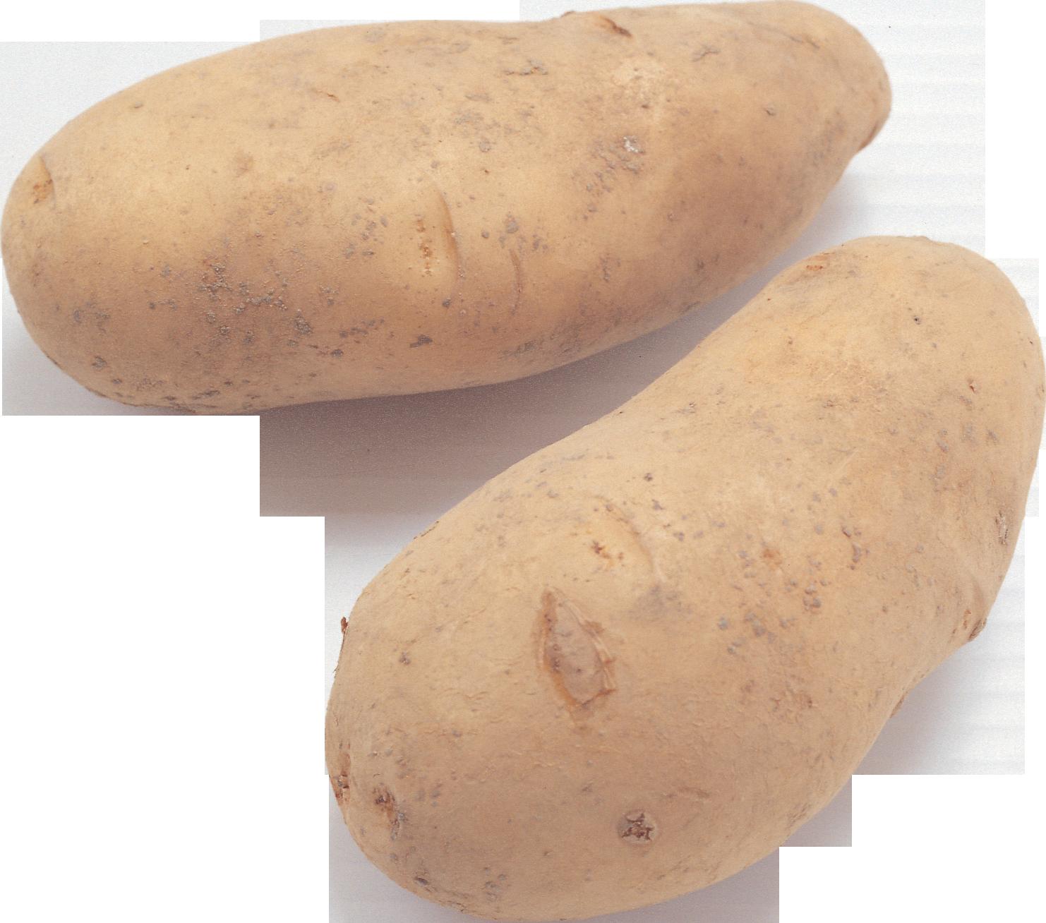 Два клубня картофеля