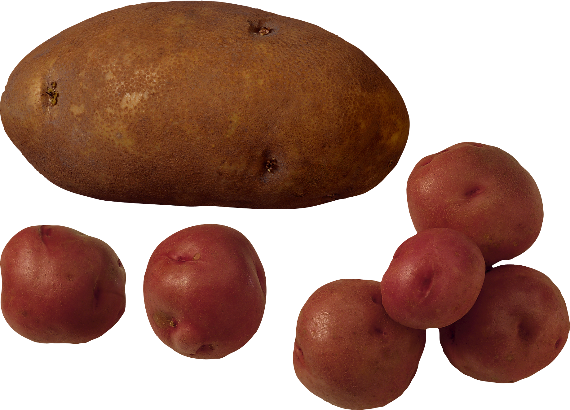 Розовый сорт картофеля