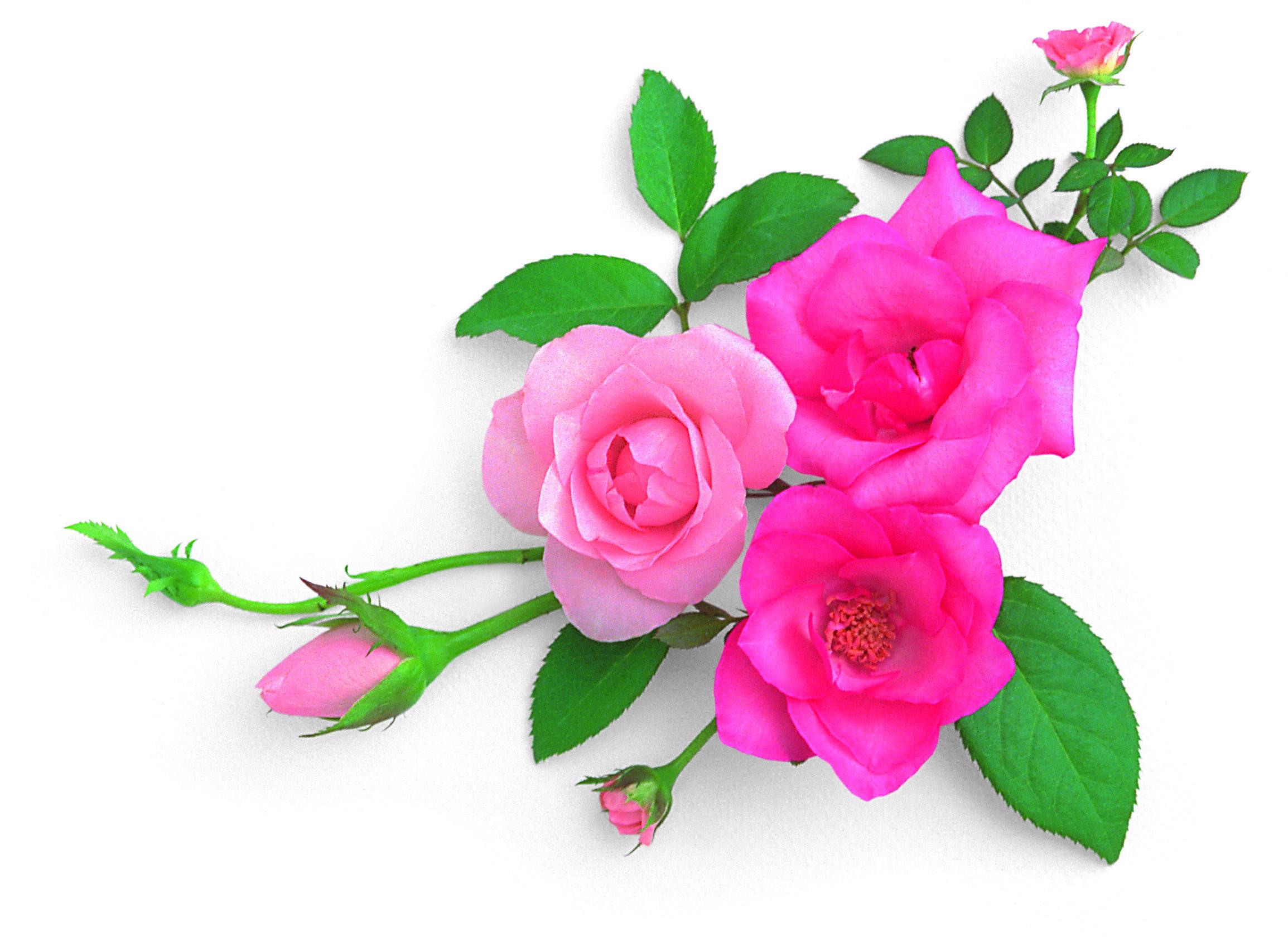 Цветы в картинках и на открытках