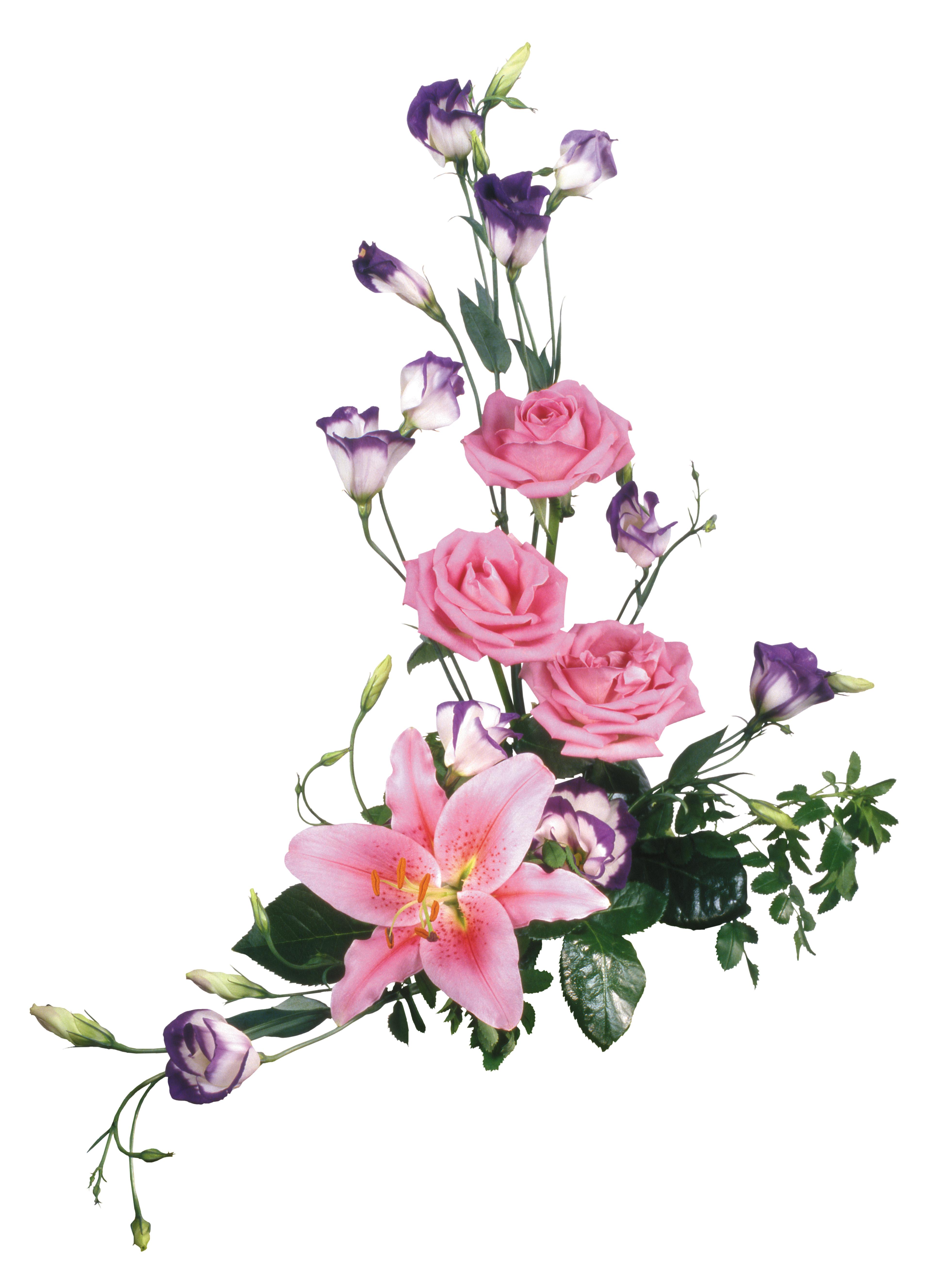 Файлы в картинках цветы