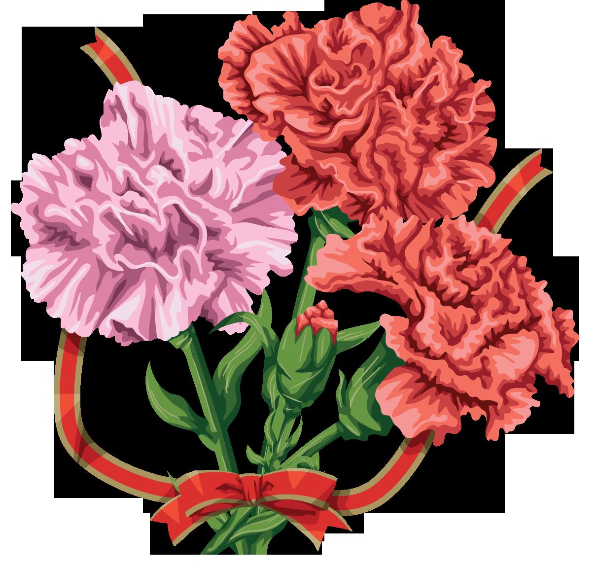 Цветы гвоздики картинки без фона