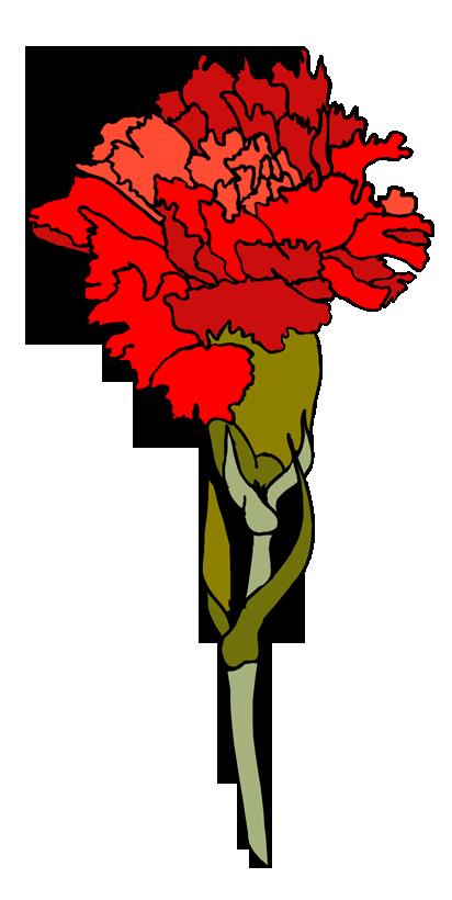 Гвоздика картинка нарисованная