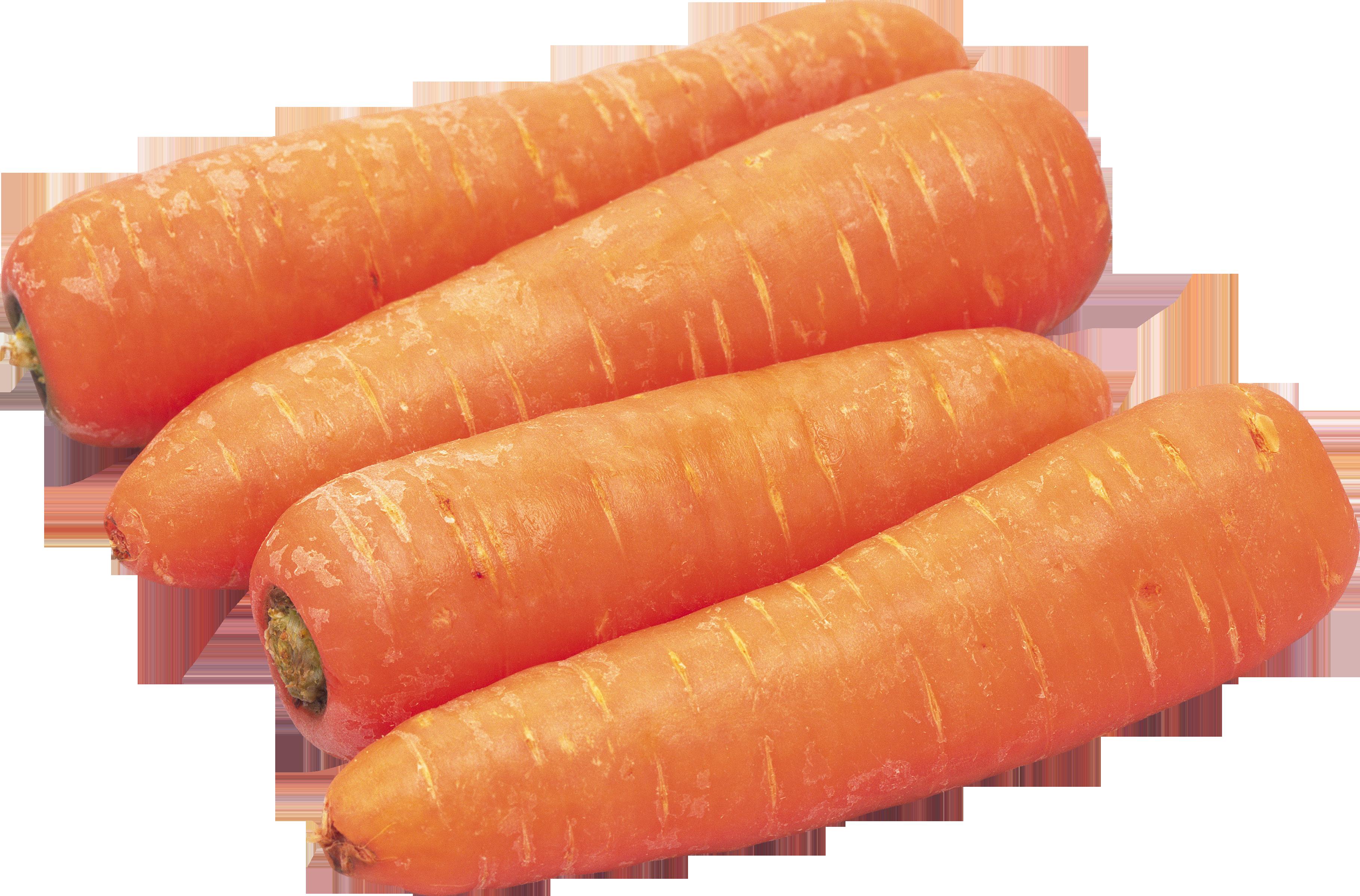 справочнику корнеплода моркови картинки имеют привилегию проклинать