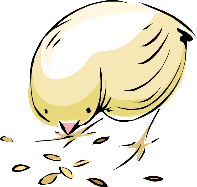 крошку картинки зерен для цыплят фото