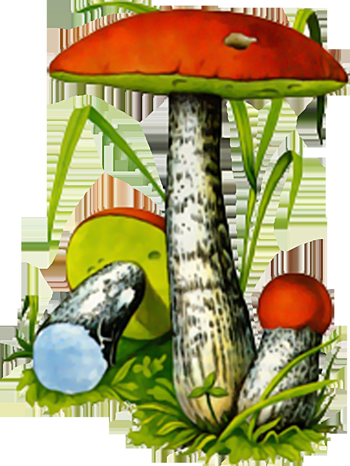 Картинка красноголовика для детей